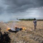 لزوم برخورد قاطع قضایی با آتش زنندگان کاه و کلش مزارع در دزفول